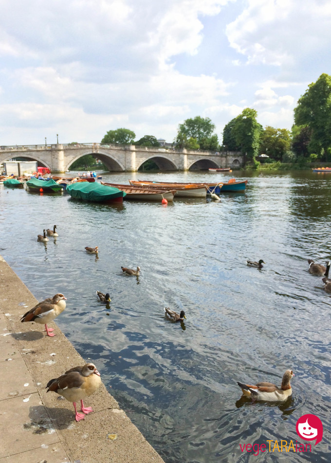 Richmond Bridge ducks