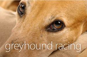 Live baiting in the greyhound racing industry