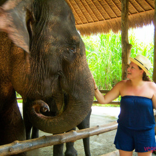 Tara Mathews at Bali Safari elephant feeding