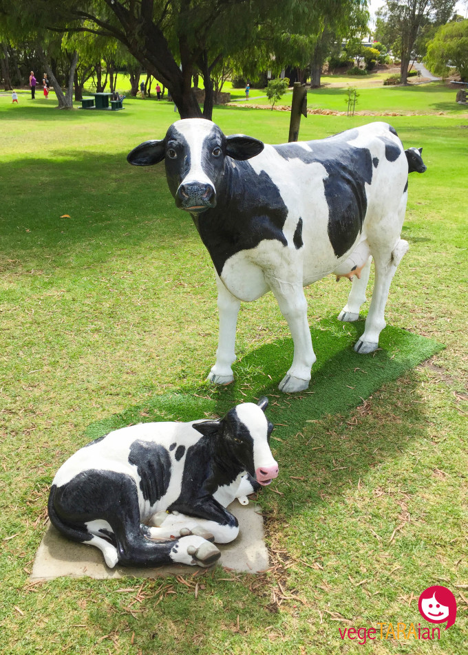 Cowramup cow statues