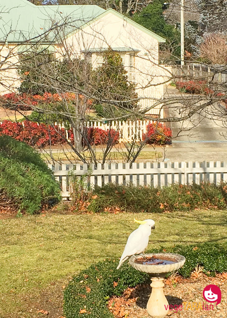 Bowral Airbnb cottage garden cockatoo