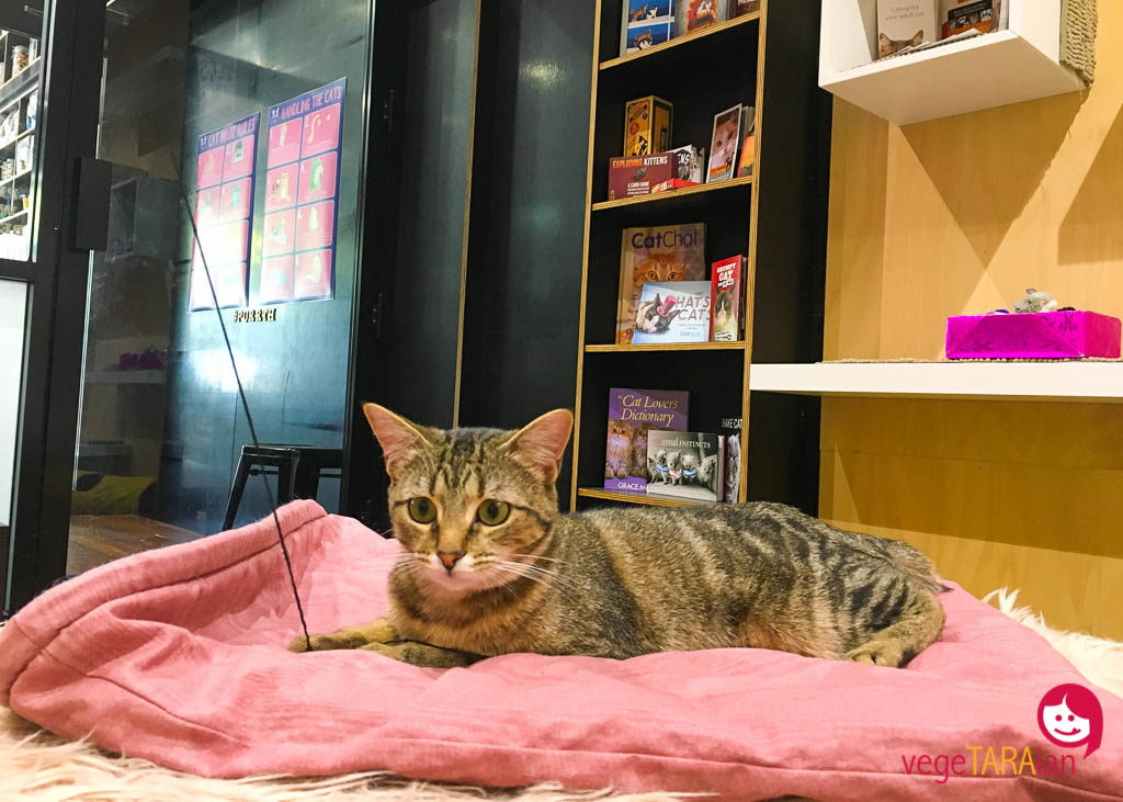 The Cat Cafe, Perth