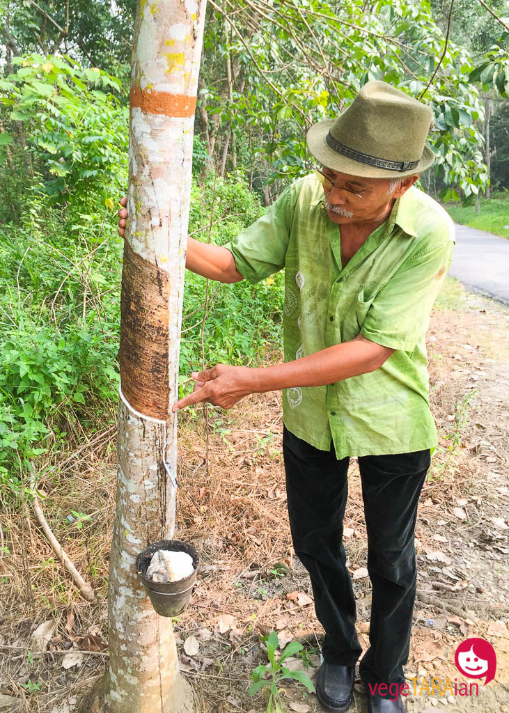 A walk around the town of Perak to learn about local plants